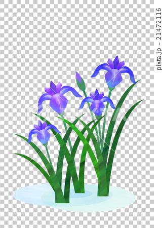 bud, iridaceae, botanical.