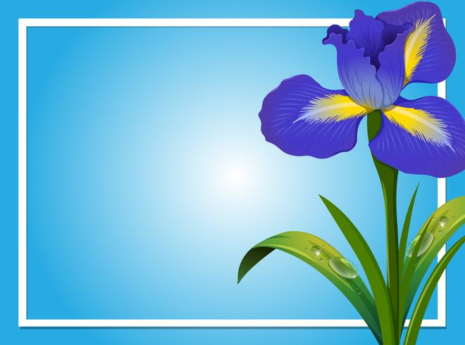 Border template with blue iris.