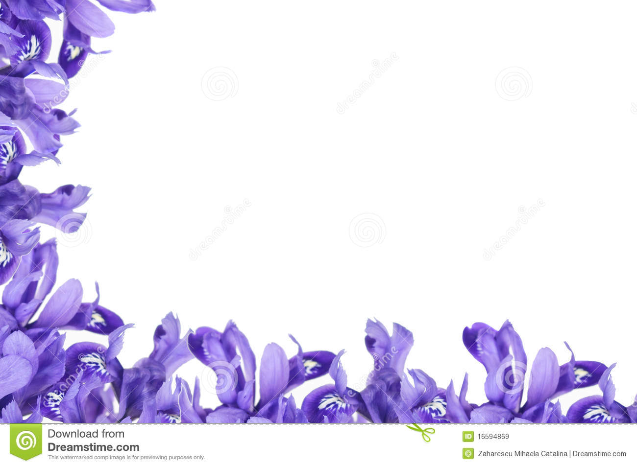 Purple Iris Clipart.