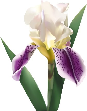 Iris Flower clip art.
