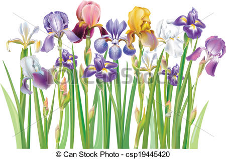 Iris Clipart and Stock Illustrations. 9,161 Iris vector EPS.