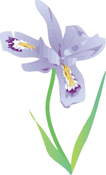 Dwarf Lake Iris Clip Art at Clker.com.