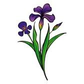 Iris Flower Clip Art Free.