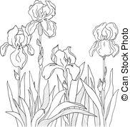 Iris Clipart and Stock Illustrations. 15,285 Iris vector EPS.