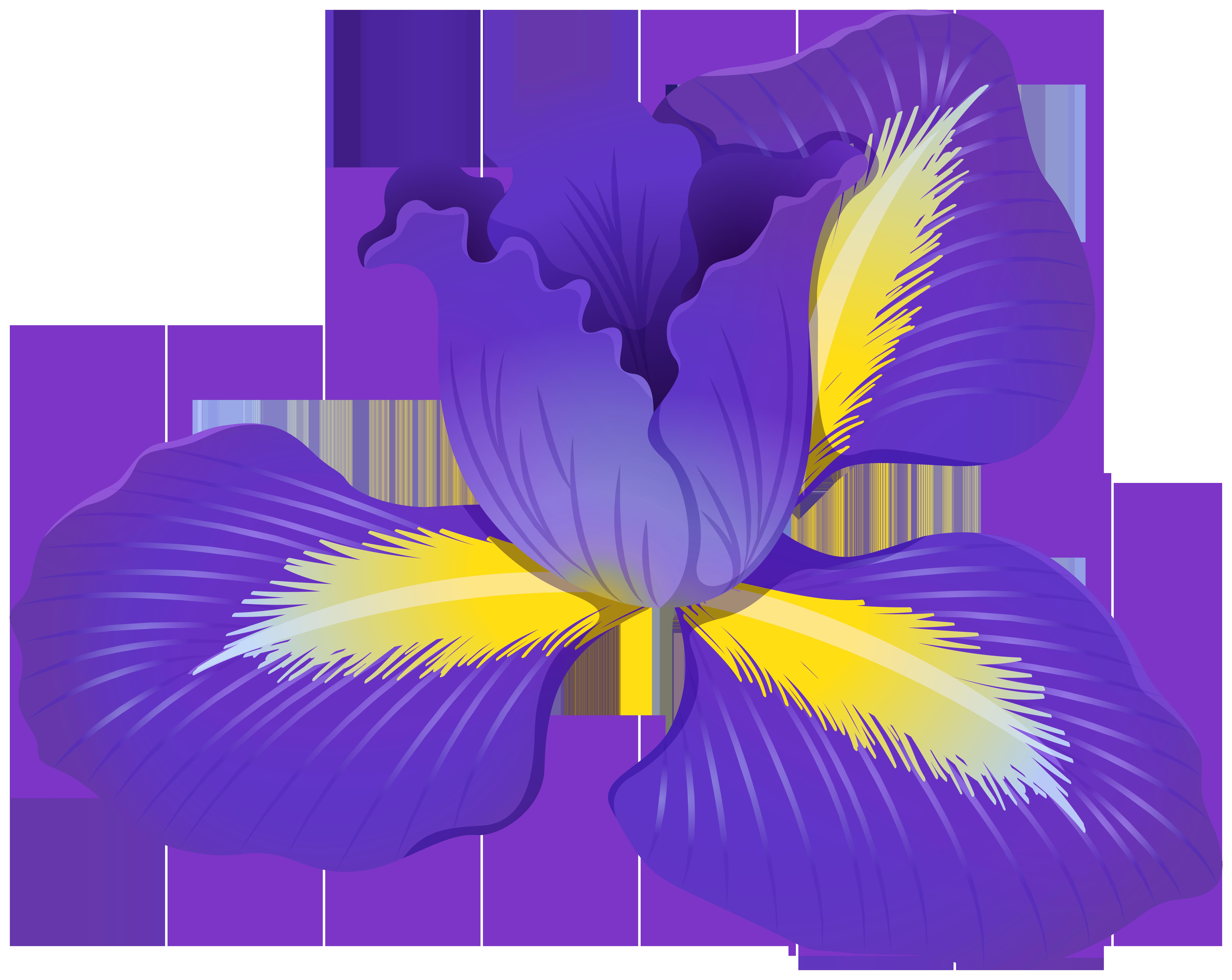 Iris Flower PNG Clipart.