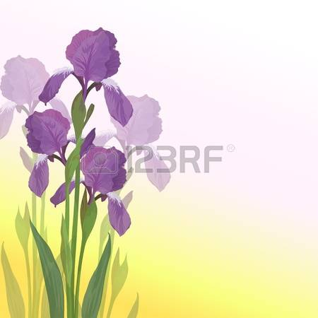 530 Yellow Iris Flower Cliparts, Stock Vector And Royalty Free.