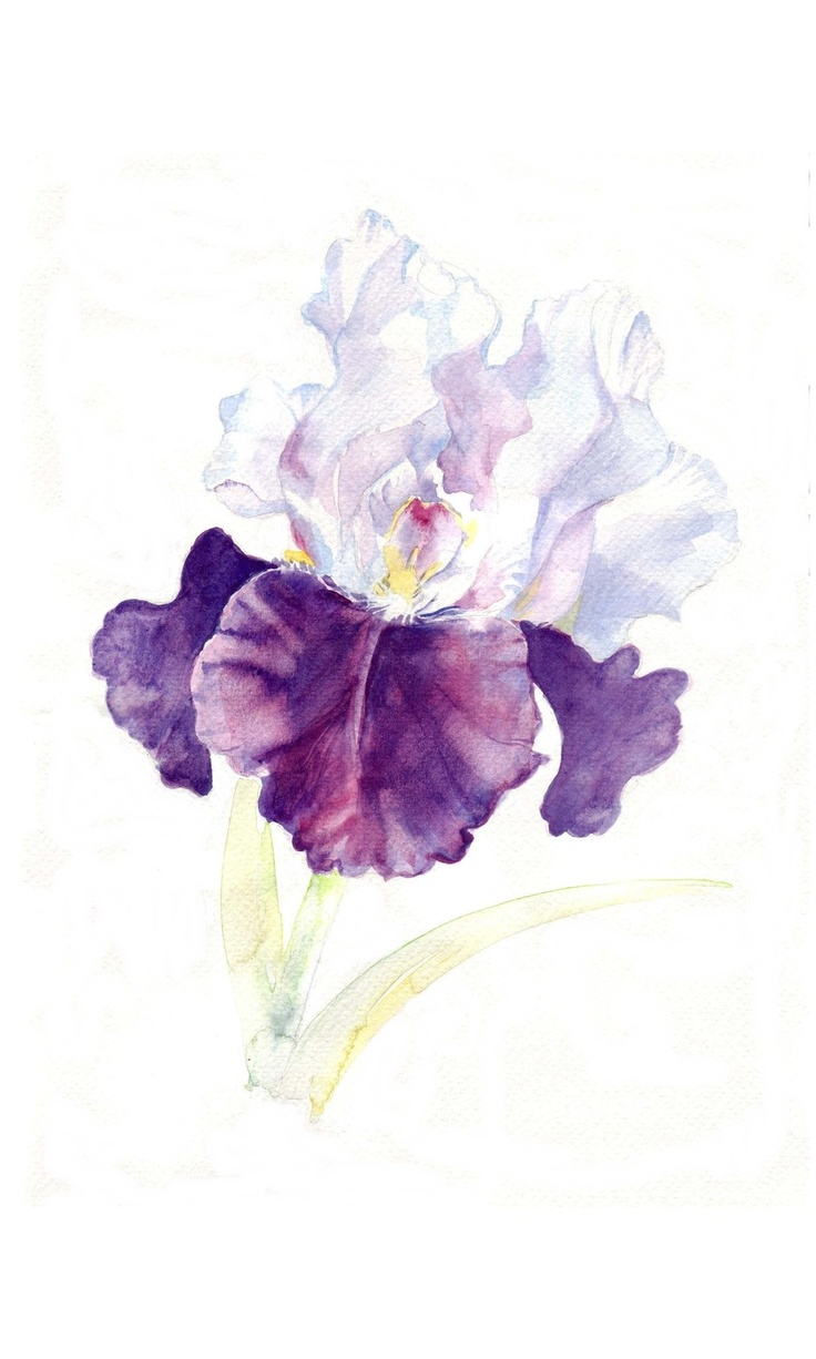 17 Best ideas about Iris Flower Pictures on Pinterest.