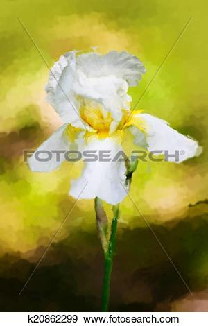Stock Illustration of water color drawing of Iris flower k20862299.