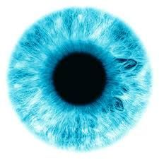 Image Result For Eye Iris Images.