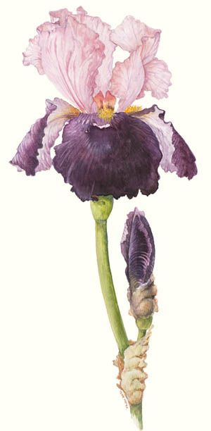 1000+ images about Flower Art and Clip Art on Pinterest.
