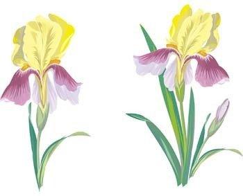 Iris Flower 1 clip arts, free clip art.
