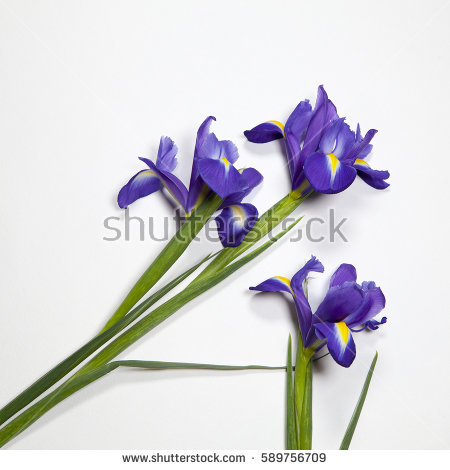 Iris Stock Photos, Royalty.