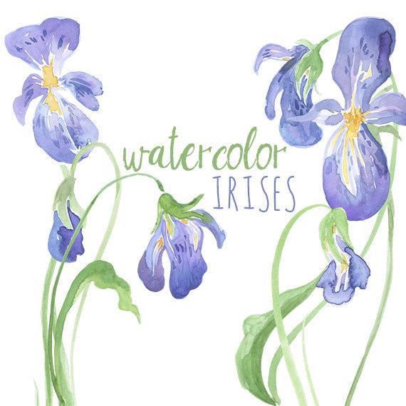 Watercolor Irises Clip Art Iris artwork by DigitalPressCreation.