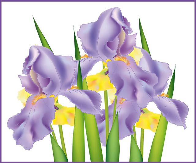 Information and Clip Art for Iris Day.
