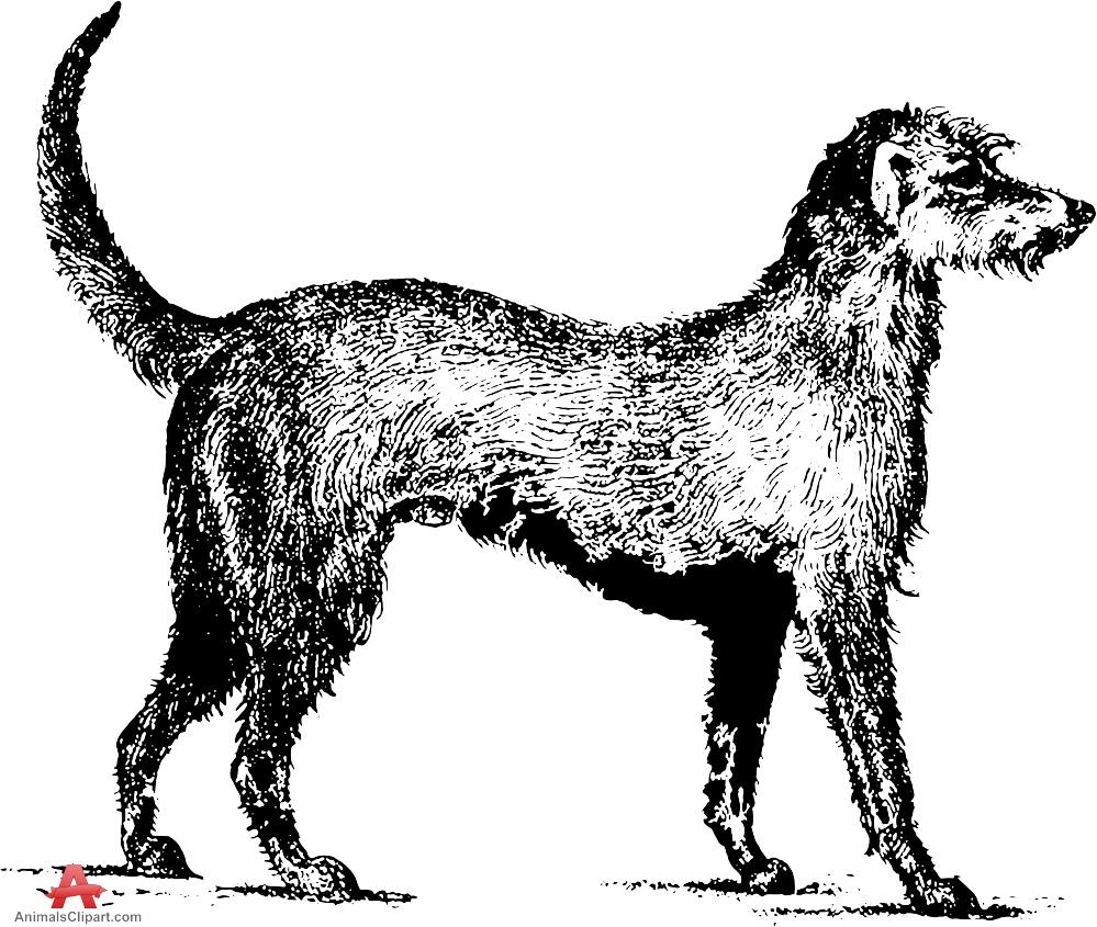 Irish Wolfhound Drawing Clipart.