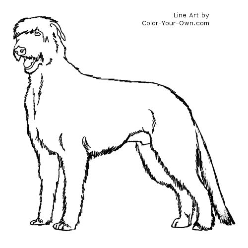 Irish Wolfhound Standing Dog Coloring Page.