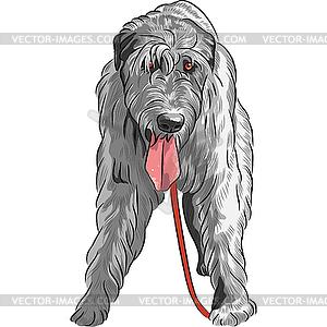 Dog Irish Wolfhound breed.
