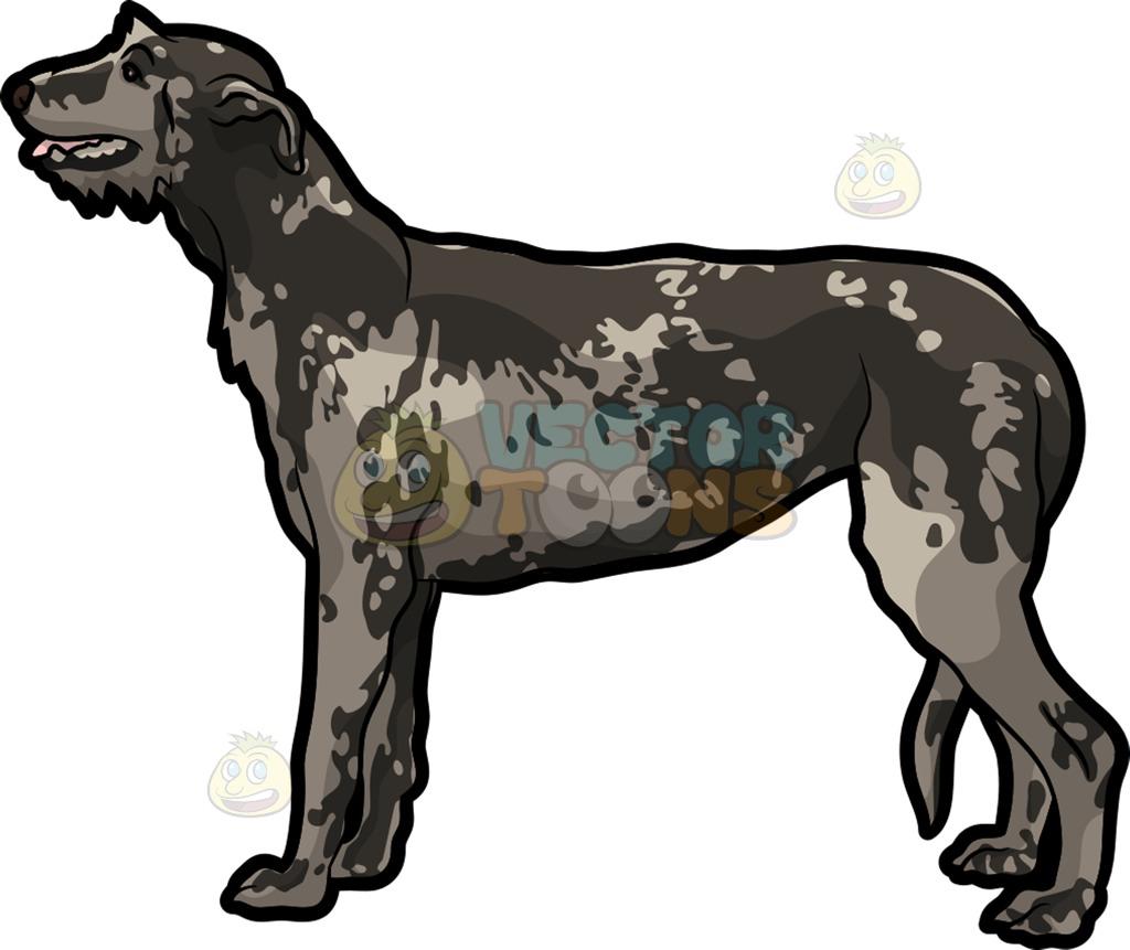 A Curious Irish Wolfhound Pet Dog Cartoon Clipart.