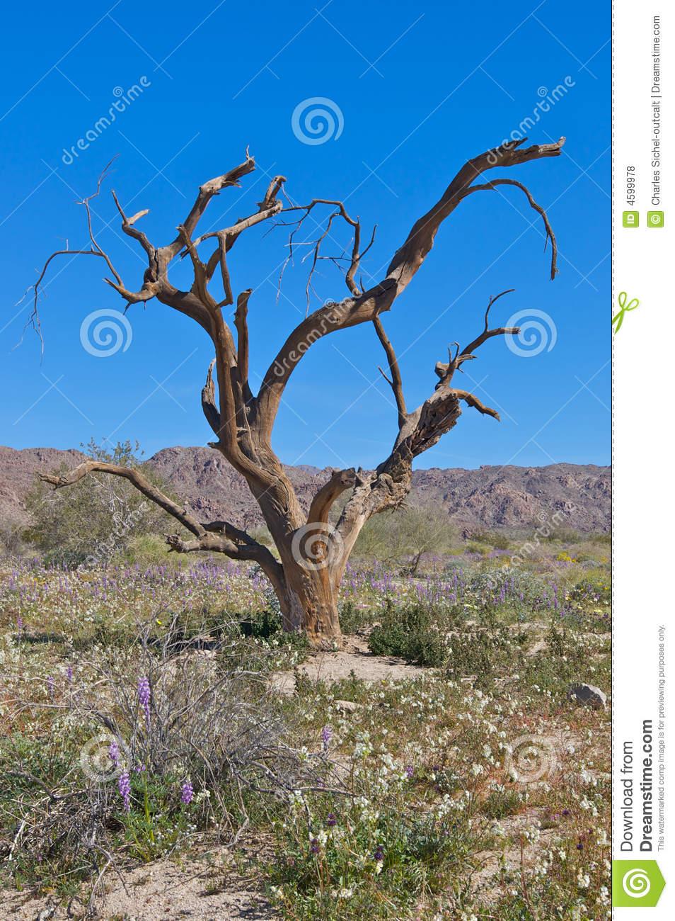Ironwood Tree Against Blue Sky Royalty Free Stock Photos.
