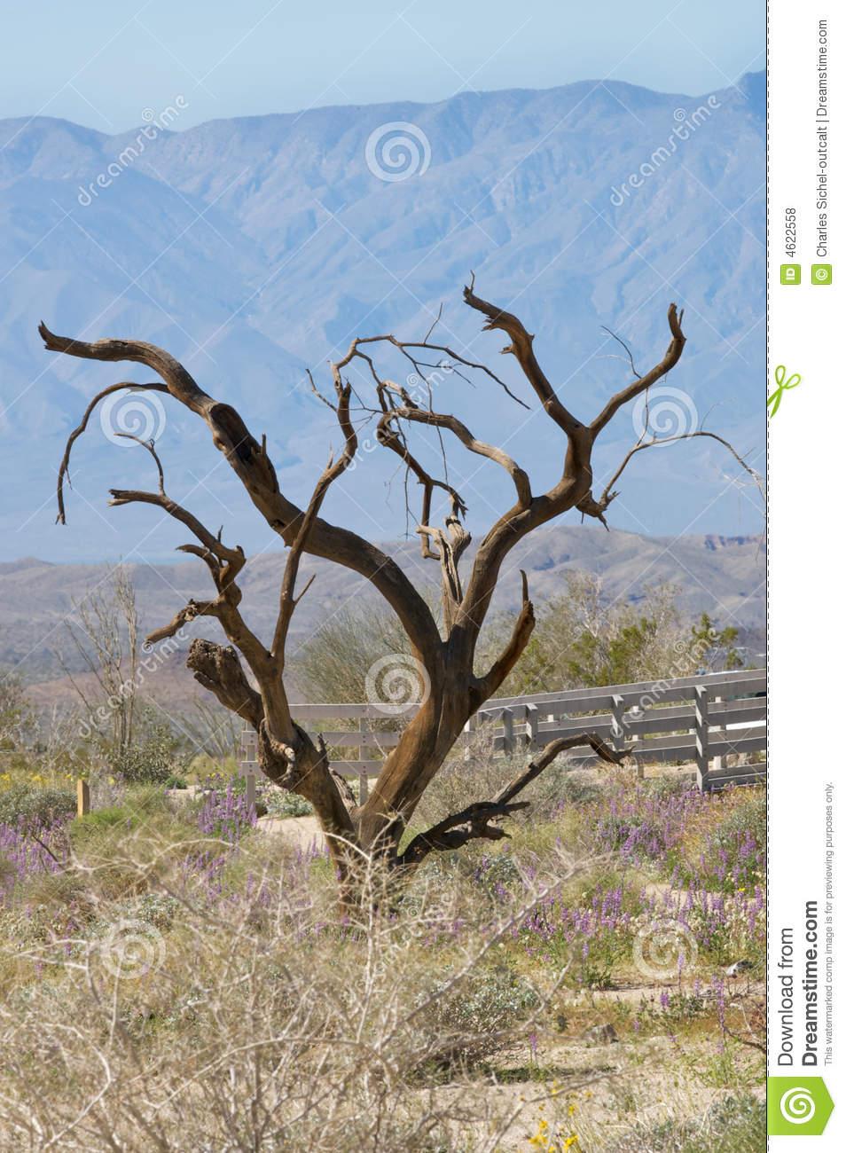 Ironwood Tree Royalty Free Stock Photos.
