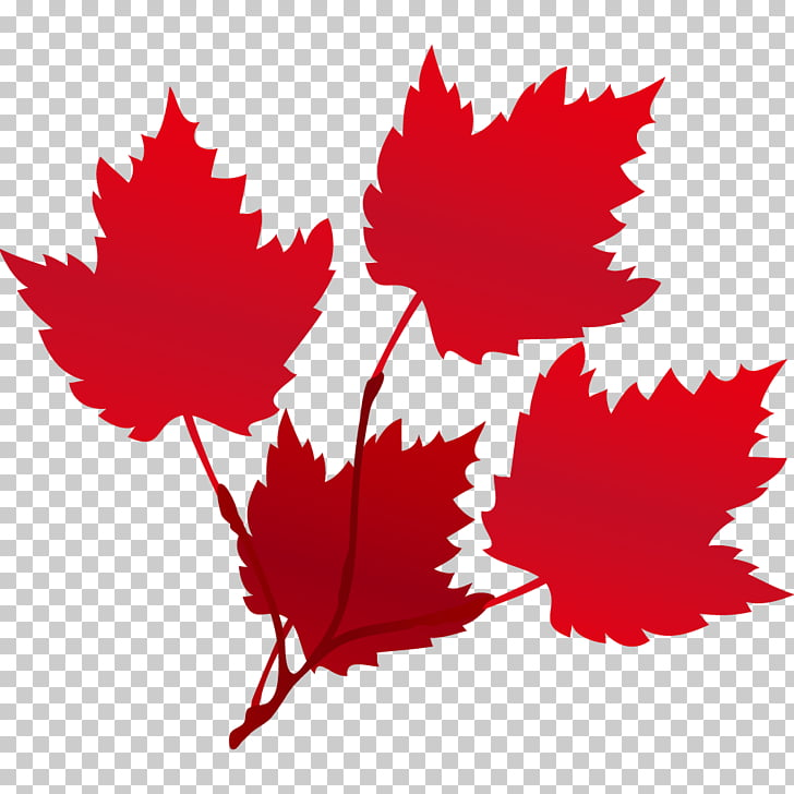 Maple leaf Red Euclidean Raster graphics, autumn leaves PNG.