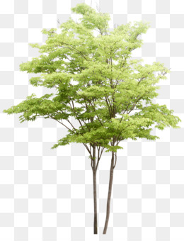 Landscaping Png Tree & Free Landscaping Tree.png Transparent Images.