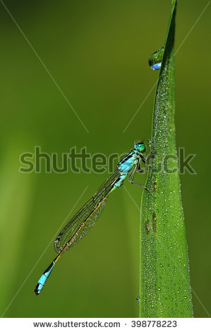 "dragonfly_larvae"" Stock Photos, Royalty."