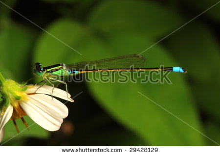 wagtail's Portfolio on Shutterstock.