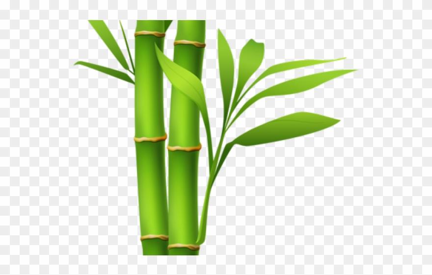 Bamboo Clipart Island Border.