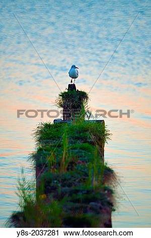 Stock Photography of Sunset at Kamminke, Usedom Island, Germany.