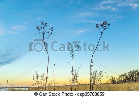 Stock Images of backwater landscape at the island of Usedom with.