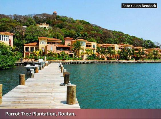 Postales de Honduras/Parrot Tree Plantation/Roatan/Islas de la.