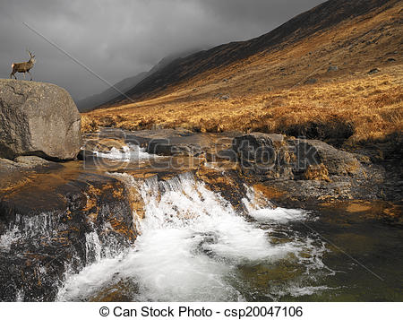 Stock Photography of Stag in Glen Rosa.