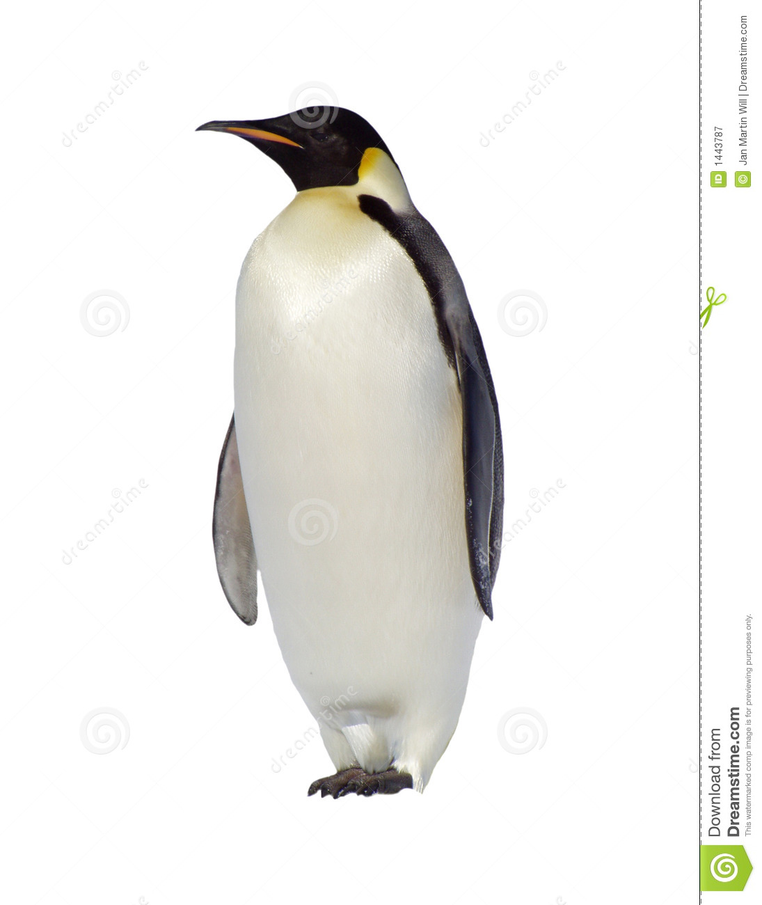 Penguin No Background Clipart.