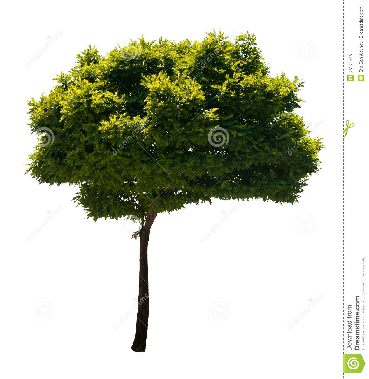 Isolated Tree stock image. Image of decoration, isolated.