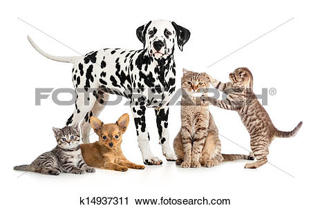 Stock Photography of pets animals group collage for veterinary or.