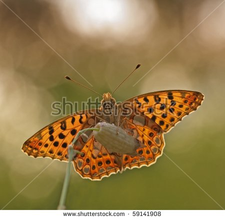 Brown Butterfly Flying Stock Photos, Royalty.