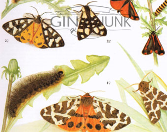 butterfly artworks.