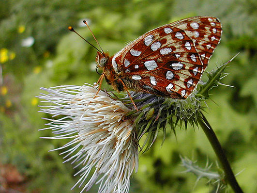 Wonderful Butterfly Pictures.