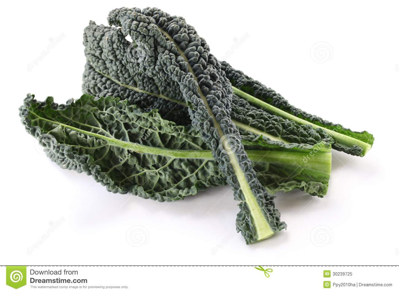 Kale Black And White Clipart.