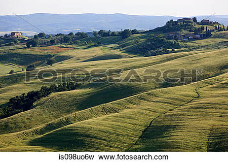 Picture of Rolling landscape near Siena, Tuscany, Italy is098uo6w.