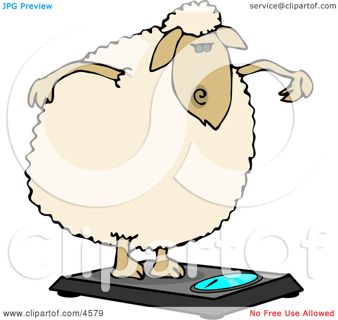 Anthropomorphic Fat Sheep Weighing Itself On a Scale Clipart by.