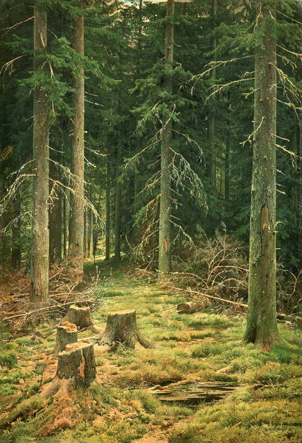 Aliexpress.com : Buy Ivan Shishkin Coniferous forest art canvas.