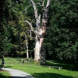 1000jährige Eichen Ivenacker Eichen.