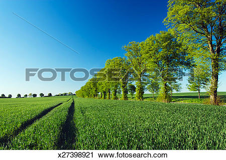Stock Photography of Germany, Reuterstadt, Ivenack, Track in field.