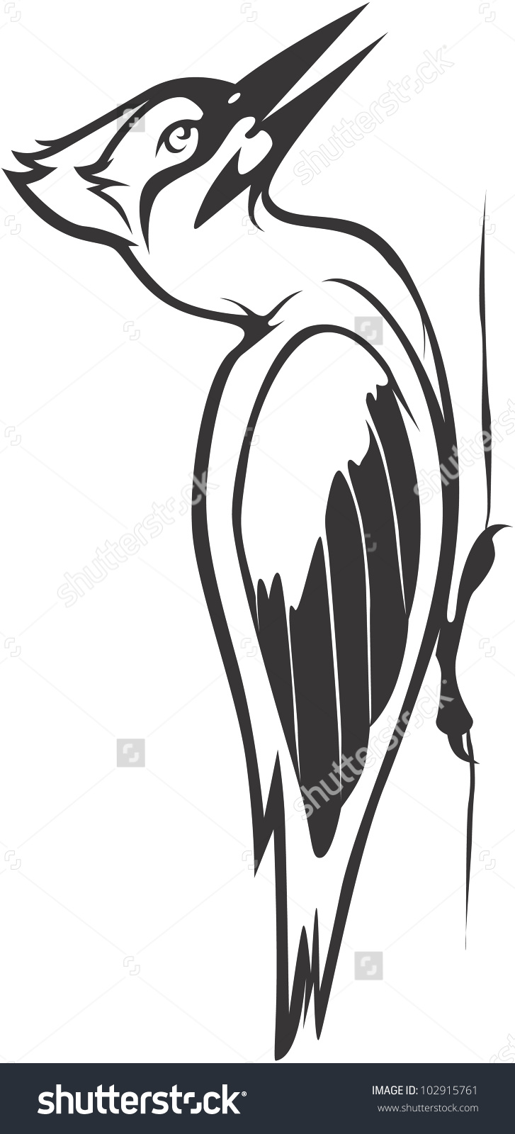 Creative Ivory Billed Woodpecker Illustration Stock Vector.