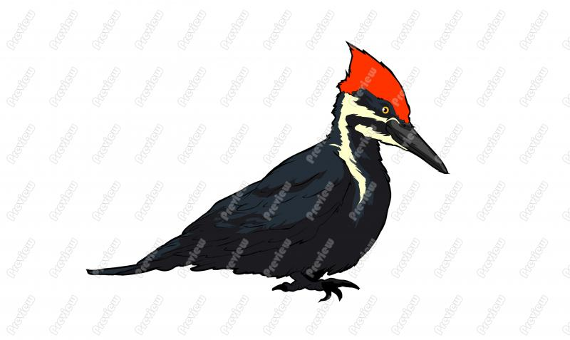 Big Woodpecker Clip Art.