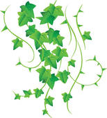 Ivy Clip Art Illustrations. 1,515 ivy clipart EPS vector drawings.