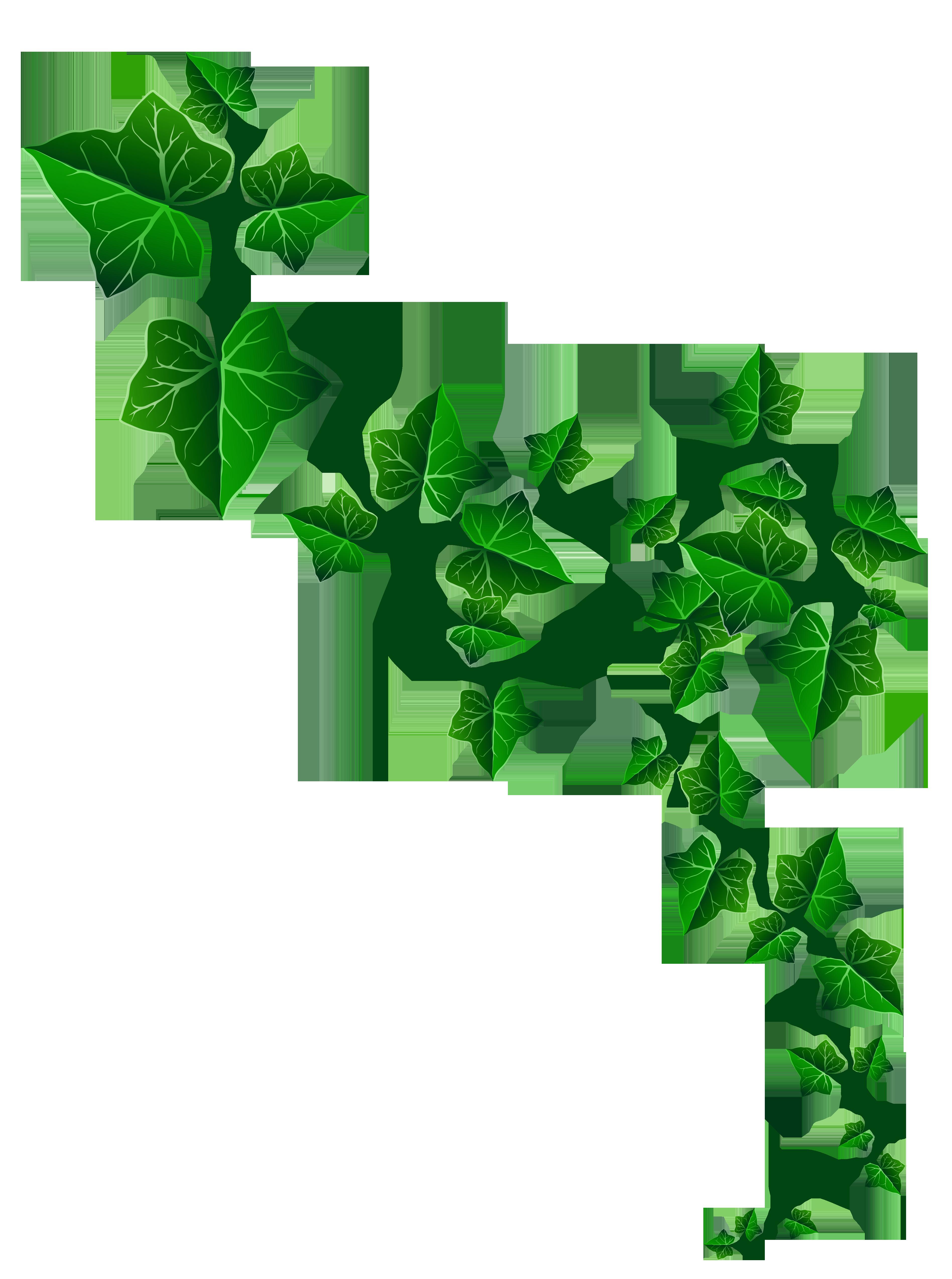 clip art ivy #10
