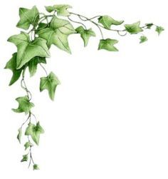 Ivy Clipart Border in 2019.